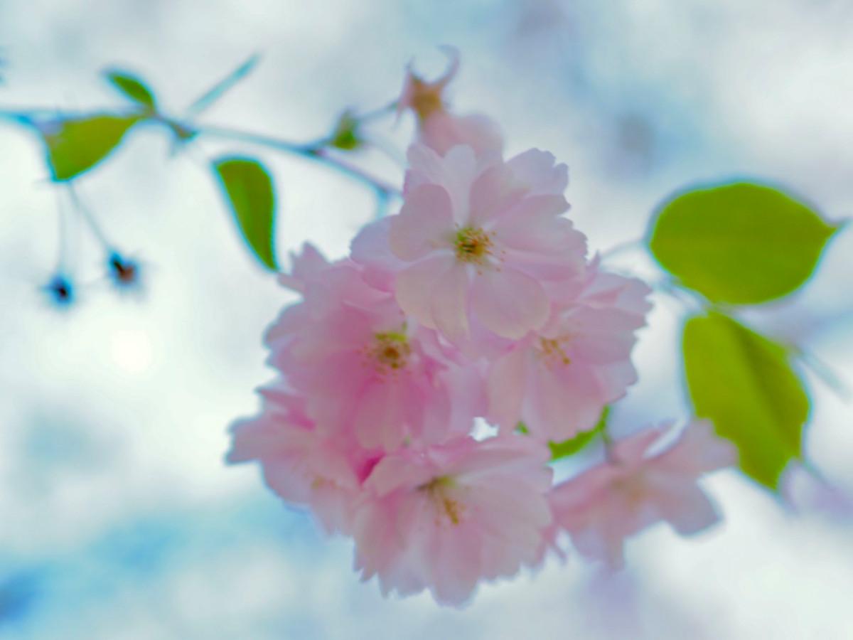 Foto ID: 1065, Prunus III
